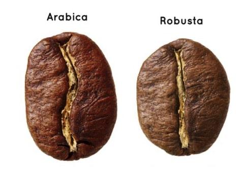 cafea robusta si arabica